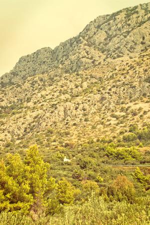 mediterranean culture: Olive Trees in countryside of Igrane, Dalmatia, Croatia - vingage version