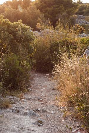 stone path: Photo of Stone path in Murter, Dalmatia, Croatia