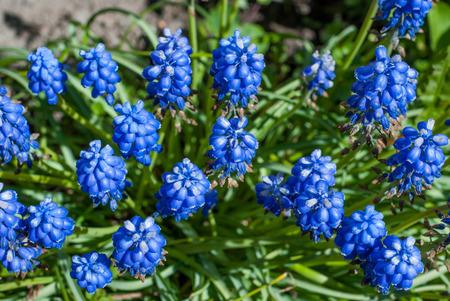 photo of wild lawn flowers close up Zdjęcie Seryjne