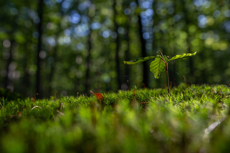 Close-up of freshness green moss and growing leaf, selective focus Zdjęcie Seryjne - 113598904