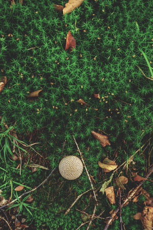 Photo of Small mushroom in the forest on green moss. Top view. Zdjęcie Seryjne - 113598934