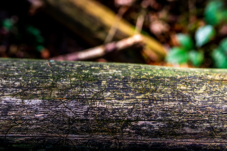 photo of old rusty log with forest as background