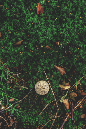 Photo of Small mushroom in the forest on green moss. Top view. Zdjęcie Seryjne - 113598945