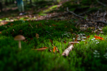 Photo of Small mushroom in the forest on green moss. Zdjęcie Seryjne - 114068513