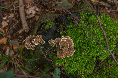 Photo of Autumn forest. Group of brown mushrooms on the old log with moss Zdjęcie Seryjne