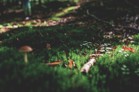 Photo of Small mushroom in the forest on green moss. Zdjęcie Seryjne - 114068527