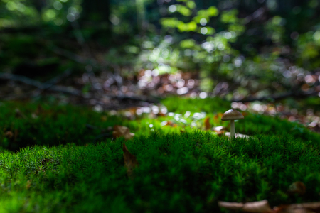 Photo of Small mushroom in the forest on green moss. Zdjęcie Seryjne - 114068537