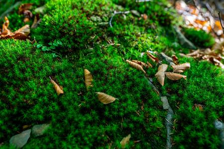 photo of Mossy green meadow in autumn forest with sunlight Zdjęcie Seryjne - 114068542