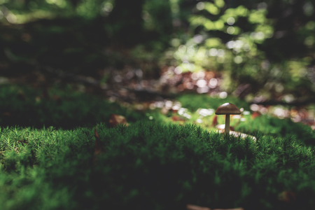 Photo of Small mushroom in the forest on green moss. Zdjęcie Seryjne - 114068545