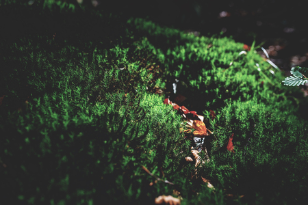 photo of Mossy green meadow in autumn forest with sunlight Zdjęcie Seryjne - 114068552