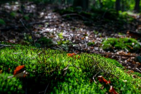 photo of Mossy green meadow in autumn forest with sunlight Zdjęcie Seryjne - 114068577