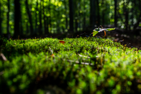 Close-up of freshness green moss and growing leaf, selective focus Zdjęcie Seryjne - 114068578