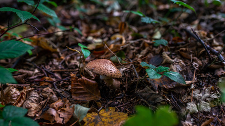 Photo of Small mushroom in the forest on green moss. Zdjęcie Seryjne - 114068587