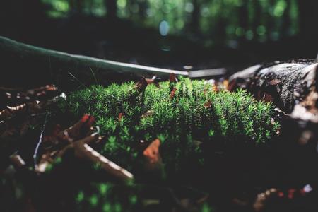 photo of Mossy green meadow in autumn forest with sunlight Zdjęcie Seryjne - 115268181