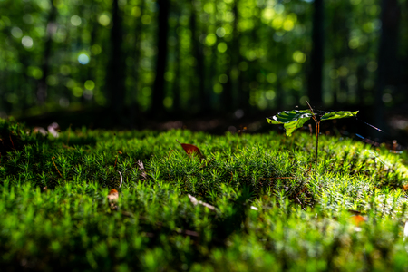 Close-up of freshness green moss and growing leaf, selective focus Zdjęcie Seryjne - 115268189