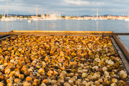 Dried figs. Photo of dry, natural figs with sea as background.