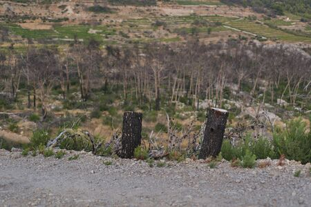Photo of Burned forest in Trstenik village, Peljesac peninsula, Dalmatia, Croatia