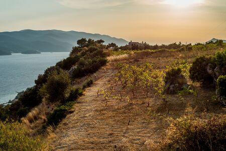 photo of Vineyard position, peninsula of Peljesac, Orebic, Dalmatia, Croatia