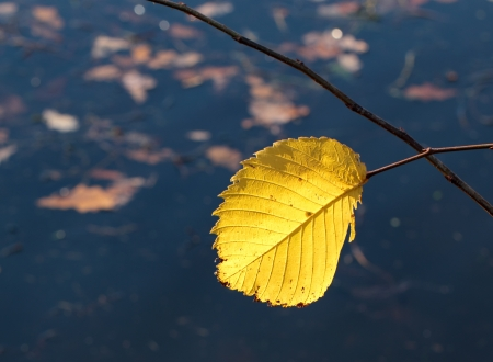 Single autumn leaf on the water background photo