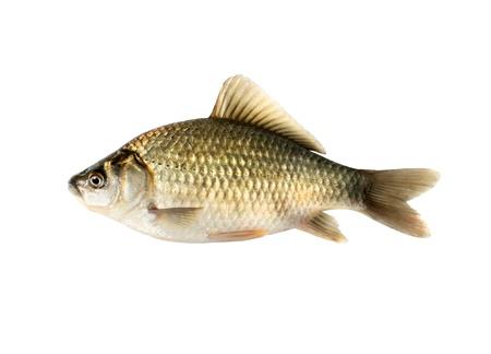 crucian carp: Crucian carp isolated on white background Stock Photo