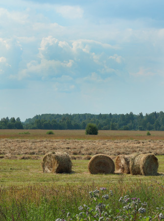 haymaking: Haystacks during the haymaking