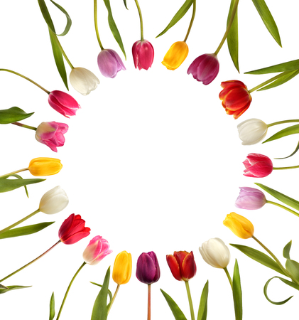 Different color tulips in the form of circle isolated on white background