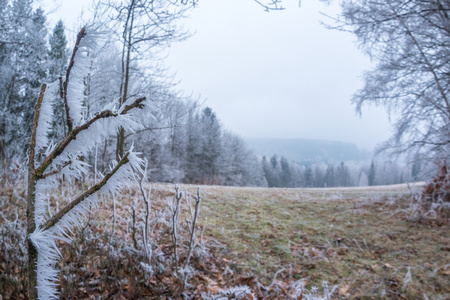 Icing branch in Moravian Beskydy Mountains, Czech Republic