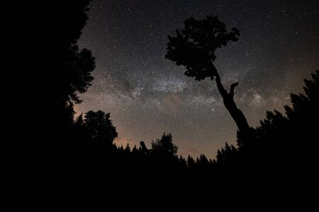 Milky Way and tree on the Beskydy mountains in Czech Republic.