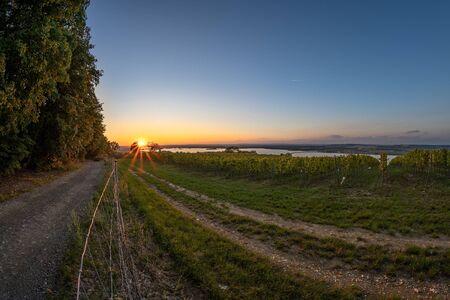 Dramatic evening with vineyard in area around Velke Pavlovice, South Moravia, Czech Republic with view of Palava. 版權商用圖片