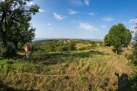 Pasture near the town in Romanian Banat with cow in distance 版權商用圖片