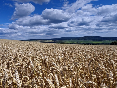summer field crops under cloudy sky Stock Photo