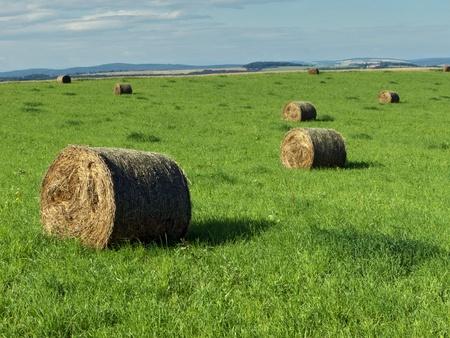 hay field: balle di paglia dopo il raccolto