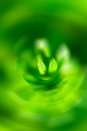 approximately: Abstract green blurred flower macro approximately Stock Photo