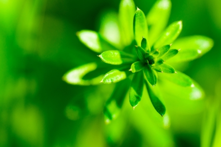 approximately: Abstract green flower approximately macro