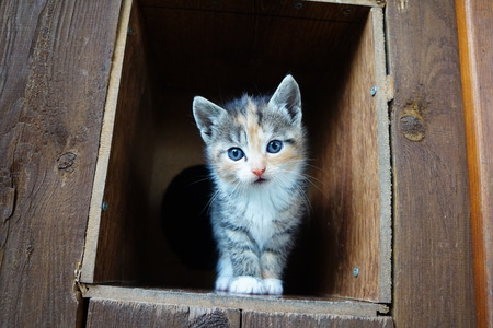 kitten Reklamní fotografie