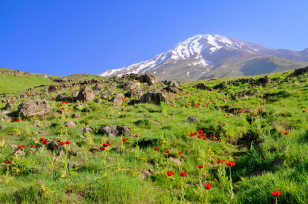 iran: Picturesque green meadow with poppies and volcano Damavand in the background, Iran Stock Photo
