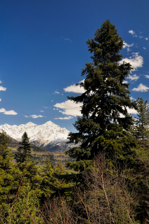 View of the snow covered mountains in Svaneti surrounded by forest photo