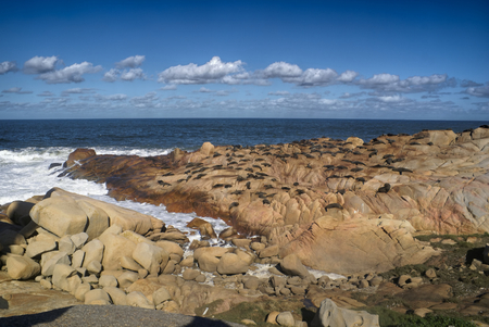Picturesque view of sea lions lying on rocks near the ocean in Cabo Polonio, Uruguay photo