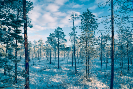 Picturesque view of snow-covered trees at sunset photo