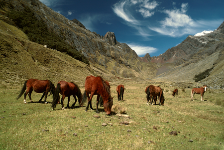 alpamayo: Horses grazing in scenic green valley between high mountain peaks in Peruvian Andes