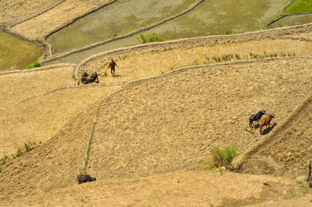 ploughing field: Aerial view of ploughing fields in Nepal