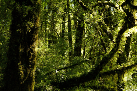 Astonishing view of tall trees covered in moss illuminated by rays of sun photo