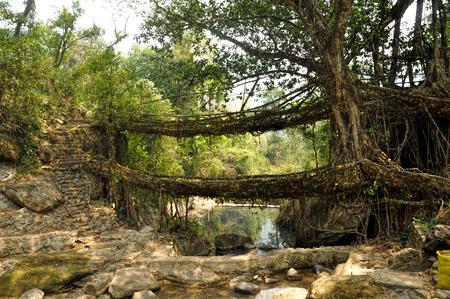 Puentes de raíces viejas cerca Cherapunjee, Meghalaya, India Foto de archivo - 35877276