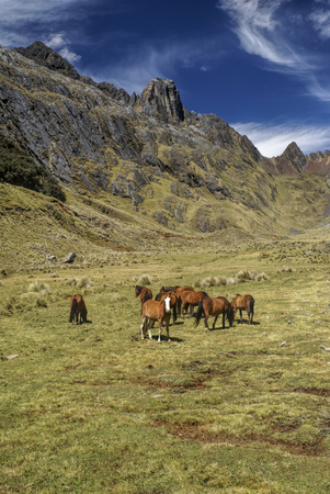 Horses grazing in scenic green valley between high mountain peaks in Peruvian Andes photo