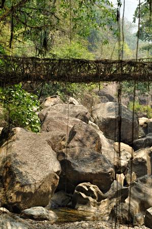 arunachal pradesh: Old root bridge near Cherapunjee, Meghalaya, India Stock Photo