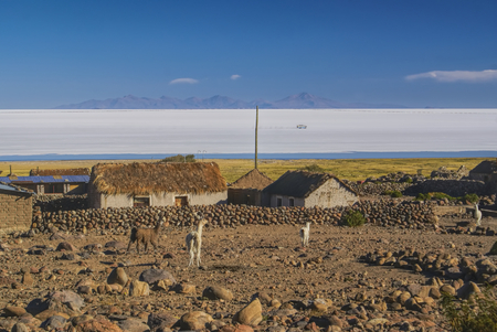salt flat: Old bolivian village with llamas and vast white salt flat Salar de Uyuni in the background