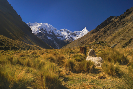 Horses grazing in scenic valley between high mountain peaks in Peruvian Andes Stock Photo