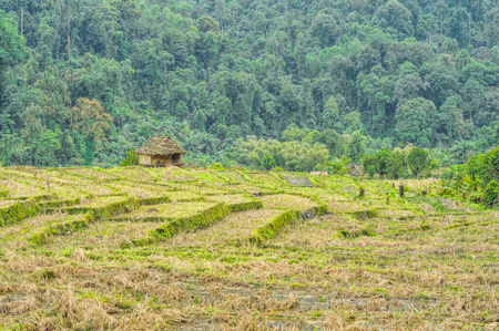 arunachal pradesh: Picturesque view of a wooden shack standing at the edge of a forest Stock Photo