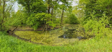wide  wet: Green pond on sunny day surrounded by green vegetation