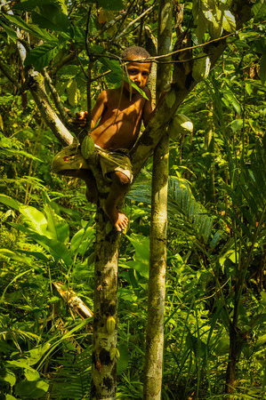 boyhood: Will-will, Papua New Guinea - July 2015: Young boy climbs tree in beautiful green forest in Will-will, Nuku, Papua New Guinea. Documentary editorial. Editorial